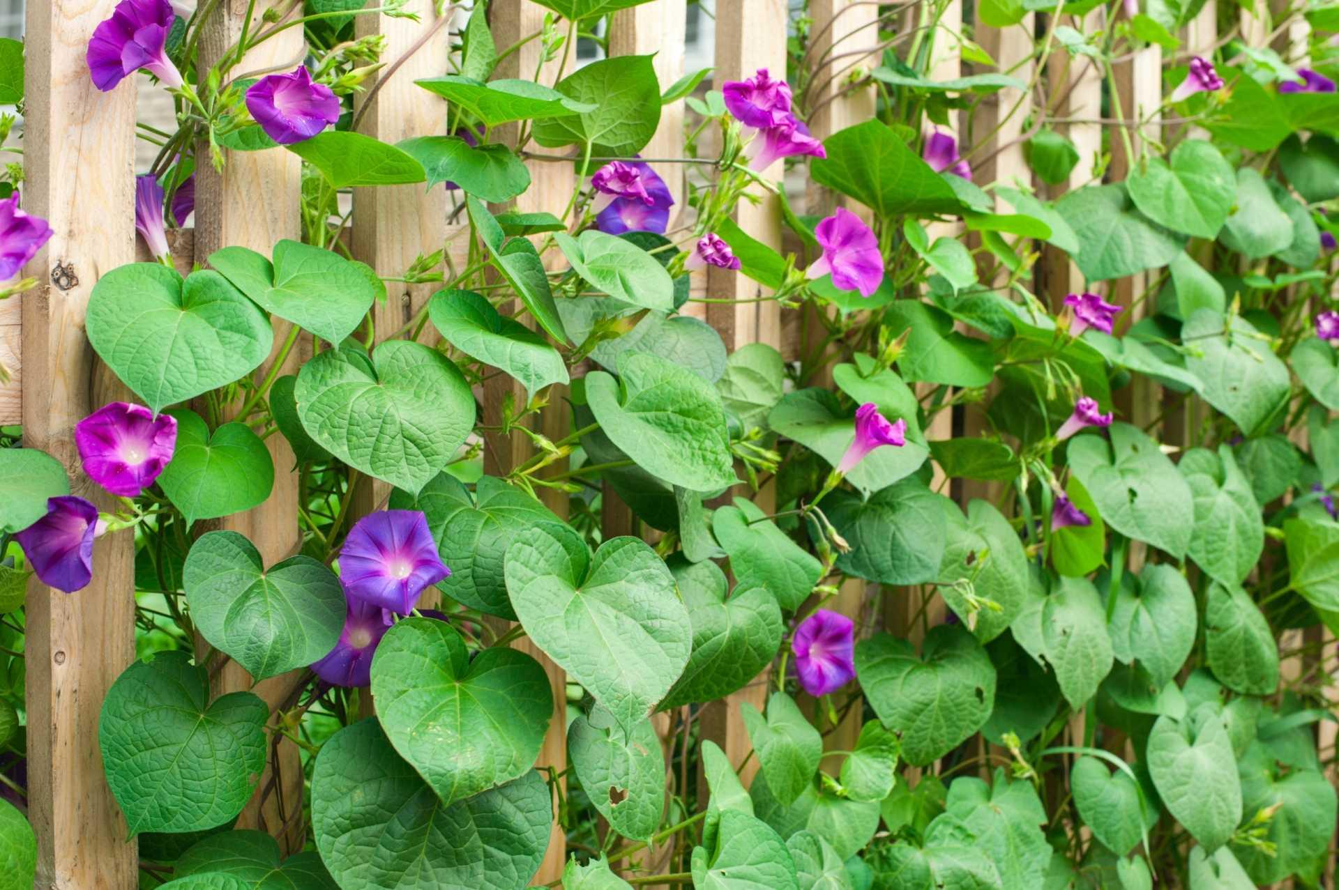 17 Gartenpflanzen für Allergiker für einen freien Atem