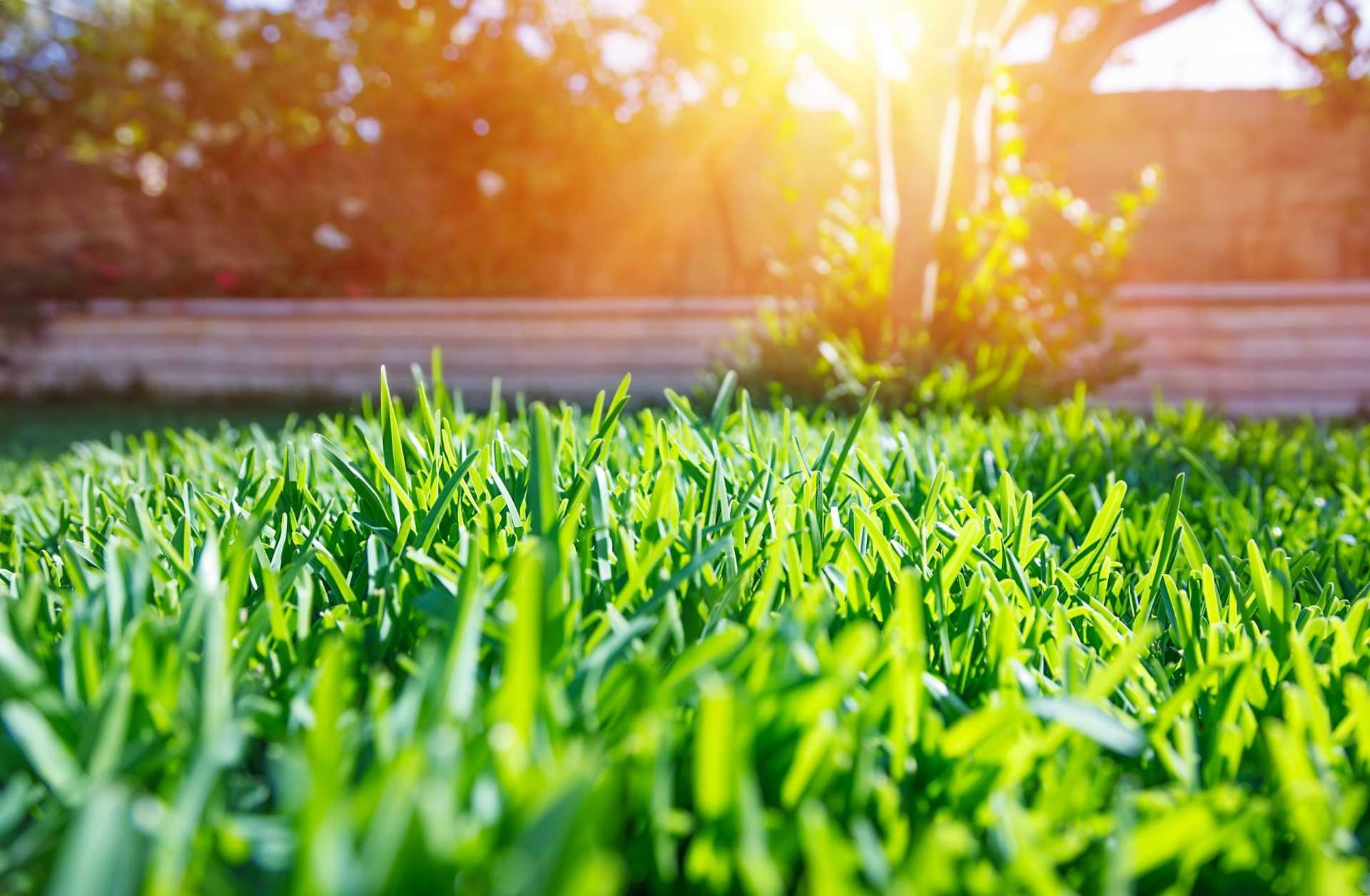 9 hilfreiche Tipps zur Rasenpflege
