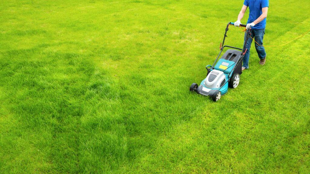 Den Rasen richtig zu mähen hilft Unkraut vorzubeugen