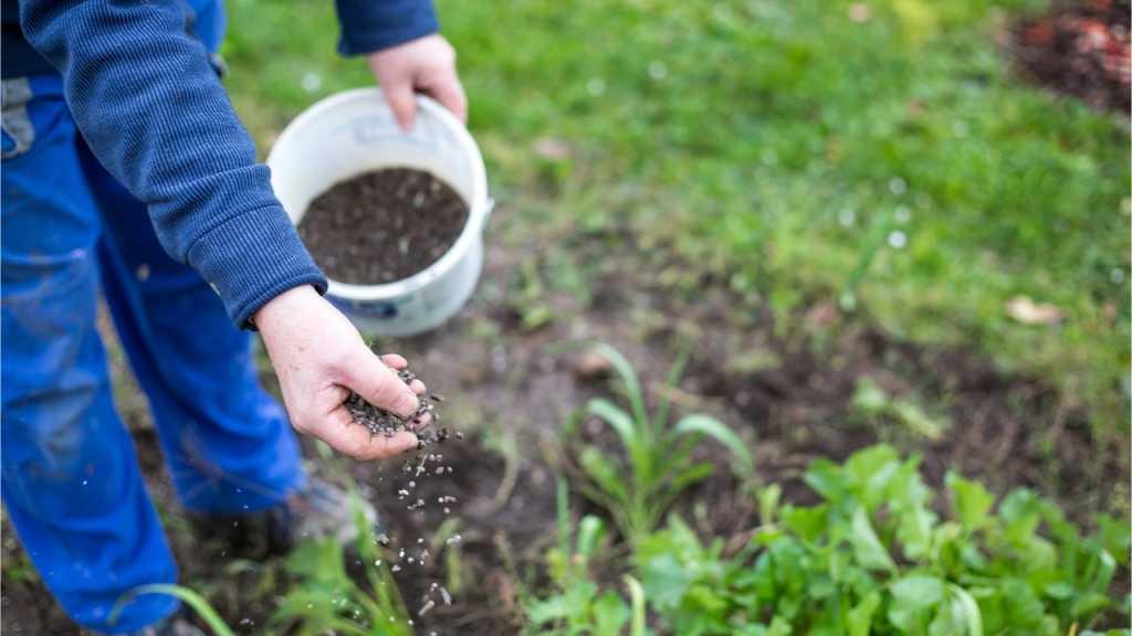 Durch die richtige Pflege, wie Rasen düngen wird der Garten grün und gesund.