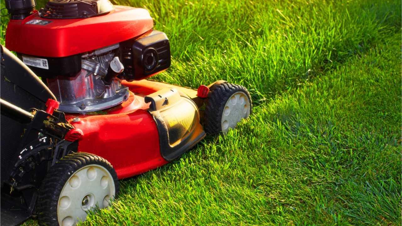 Ab wann sollte der Rasen gemäht werden?