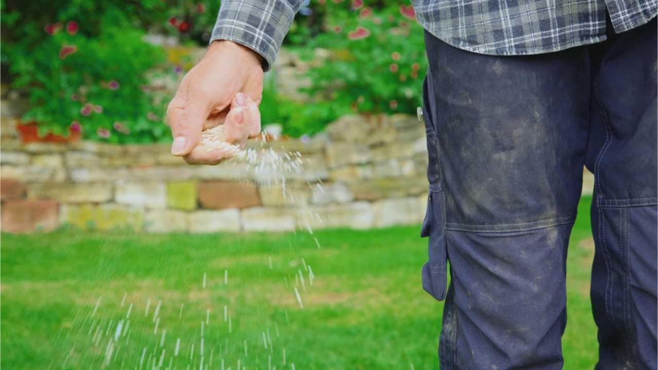 Rasen säen: Das müssen bei Rasensamen und Rasen säen beachten