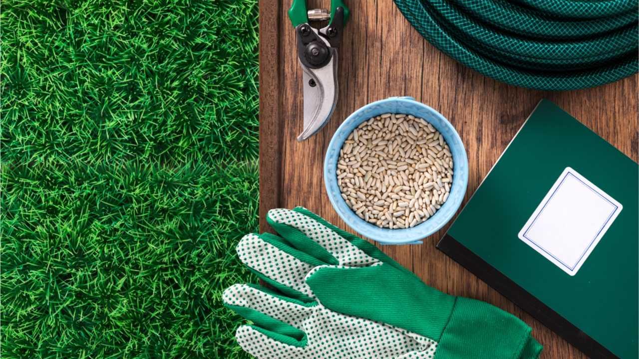 Rasen nachsäen: Was zu beachten ist