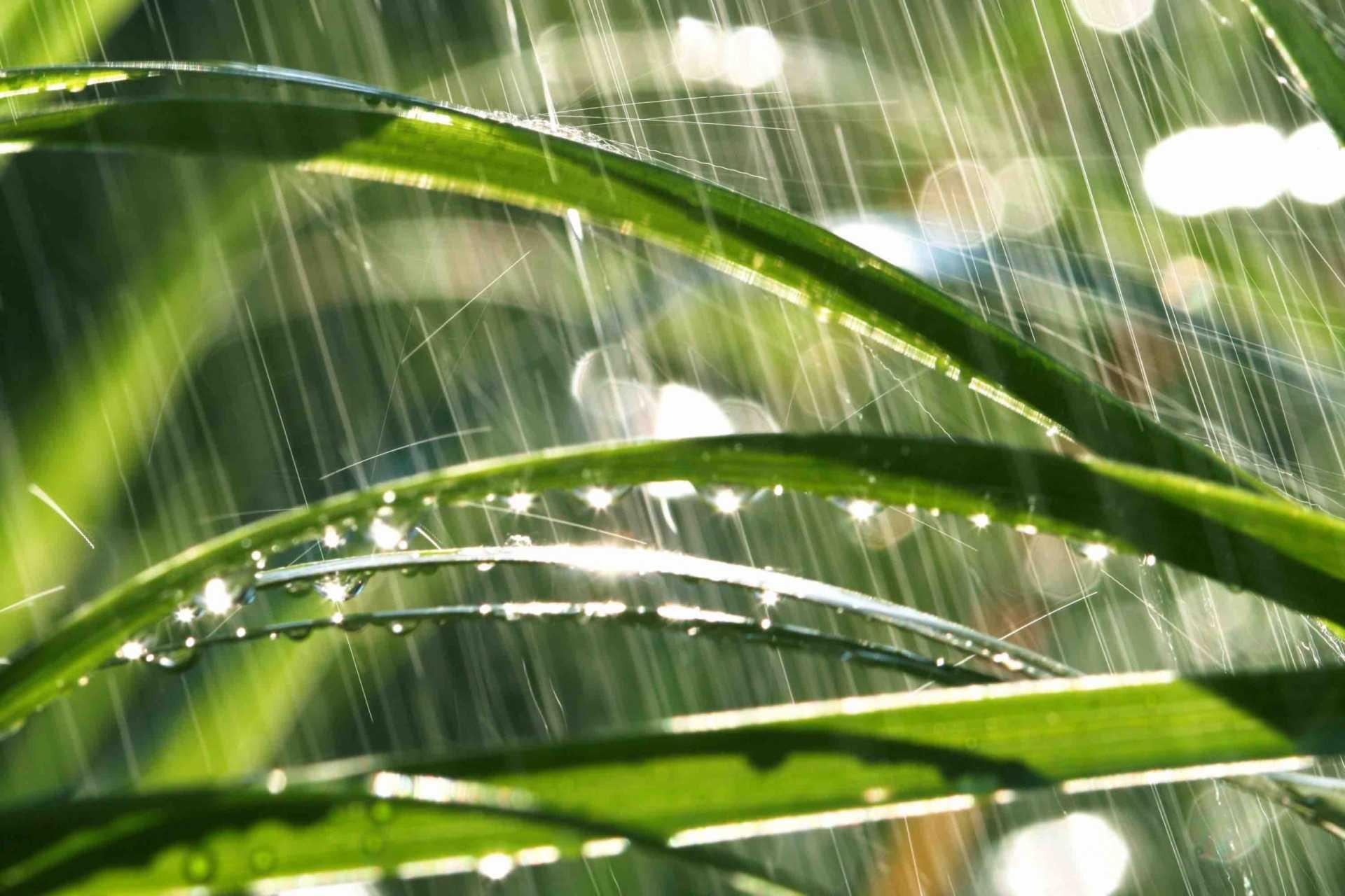 4 Fragen zum Thema Rasen düngen ohne Regen beantwortet