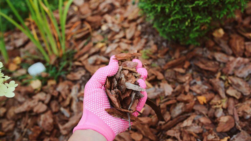 Richtig Mulchen hilft gegen Unkraut im Rasen