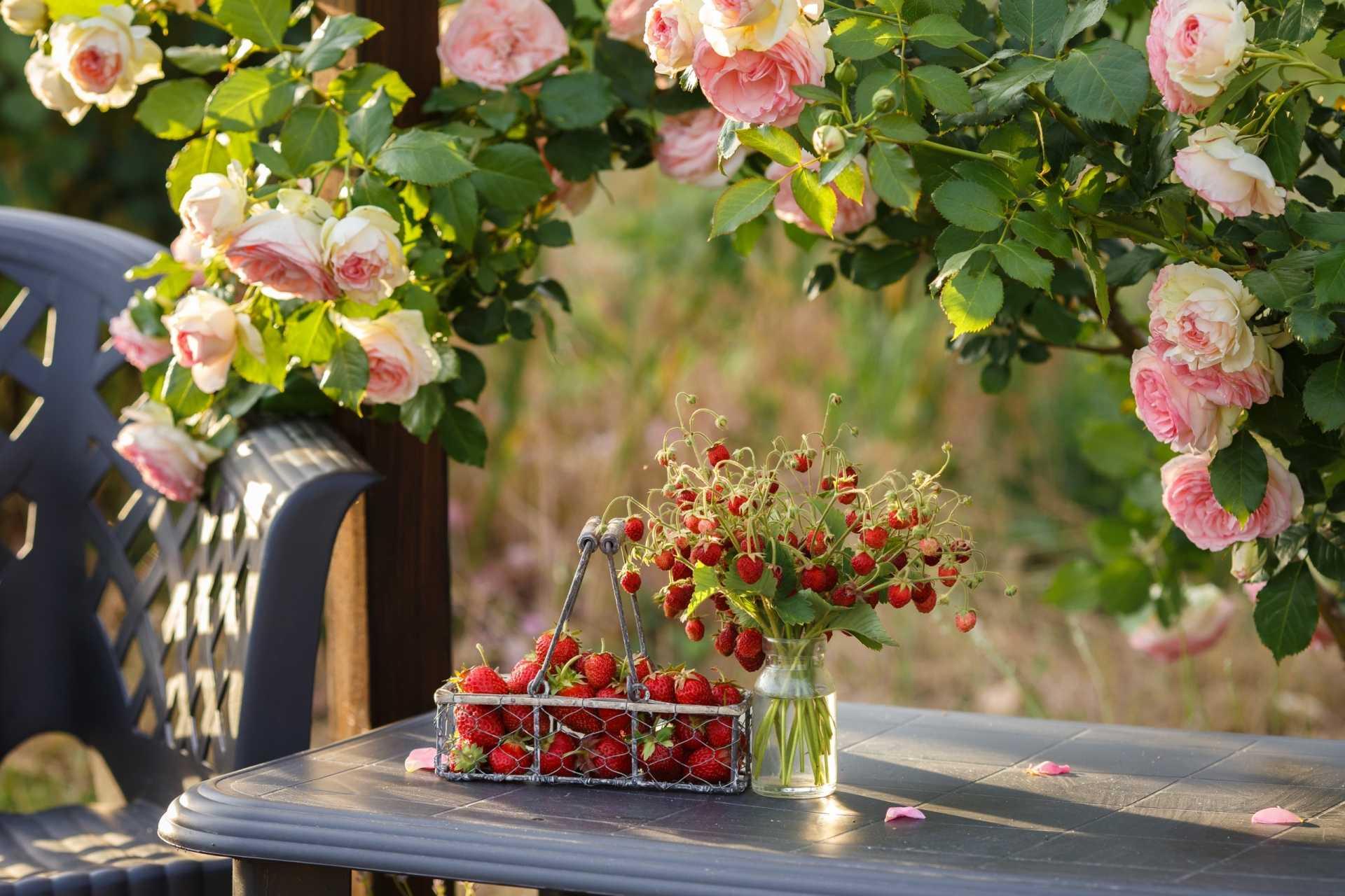 6 Tipps zum Rosen düngen + Düngeplan für das ganze Jahr