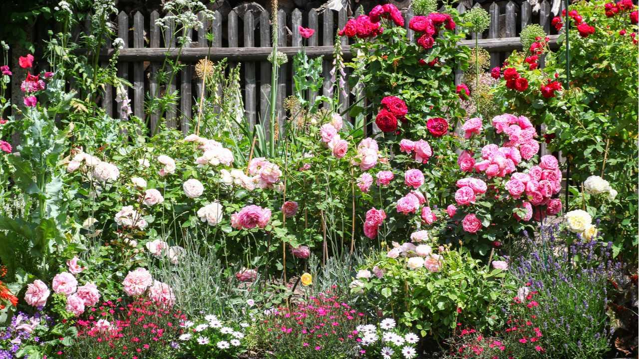 Rosenanbau – 10 einfache Tipps