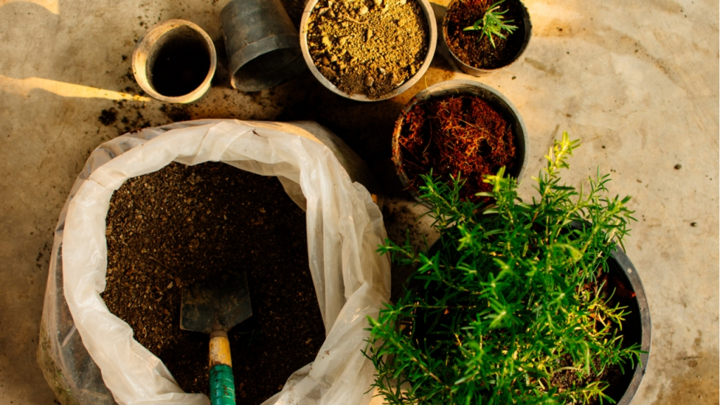 Verwenden Sie zum Düngen von Rosmarin am besten natürliche und organische Mittel.