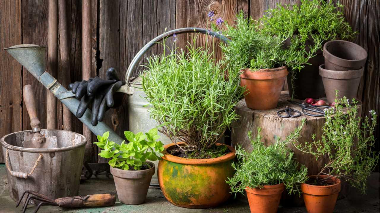 Rosmarin richtig anbauen – 10 Tipps