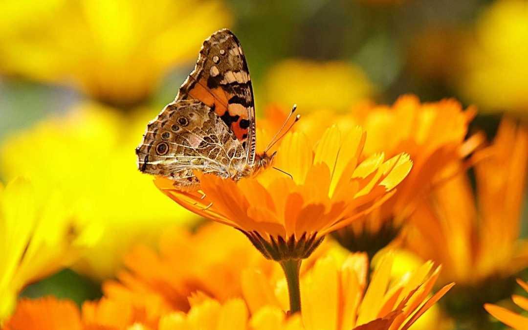 Tipps für den Blumengarten