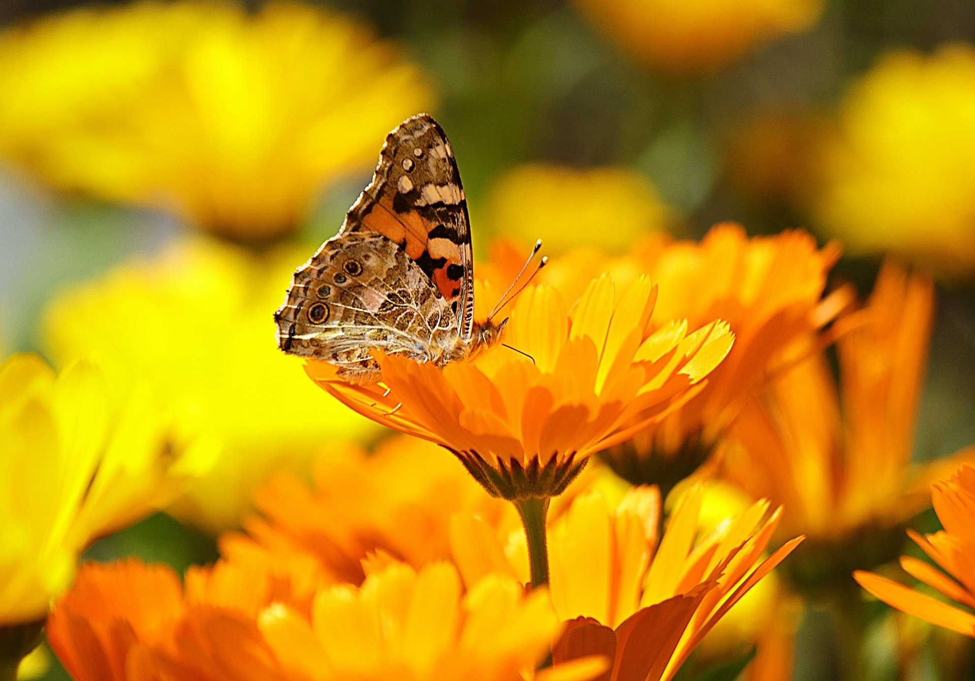 10 nützliche Insekten für Ihren Garten