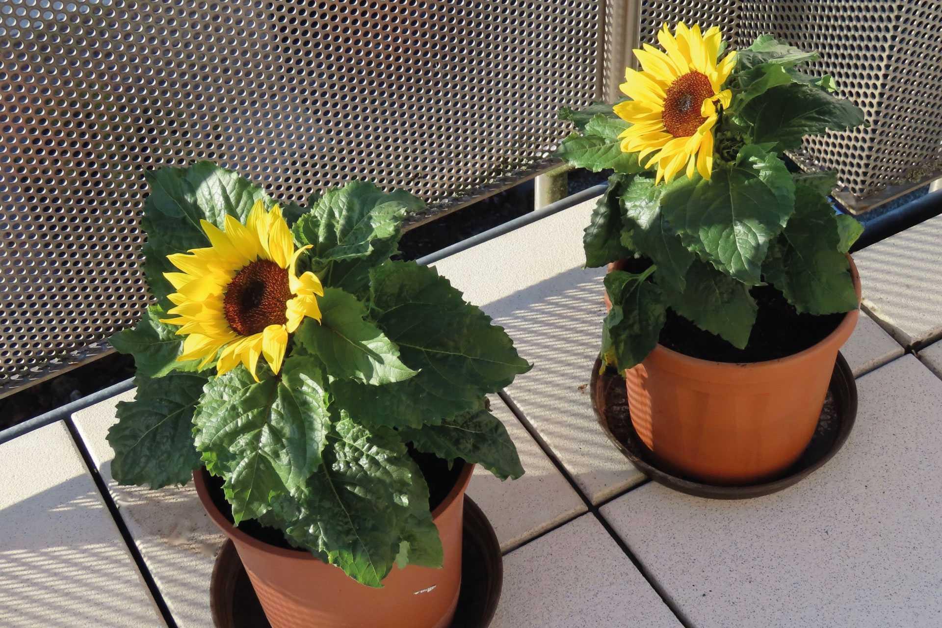 21 Winterharte Balkonpflanzen