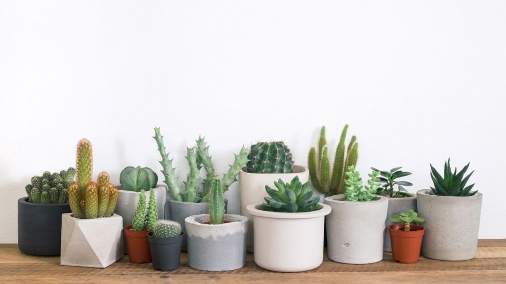 Kakteen und Sukkulenten sind die Klassiker unter den Pflanzen, die viel Sonne vertragen und wenig Wasser brauchen.