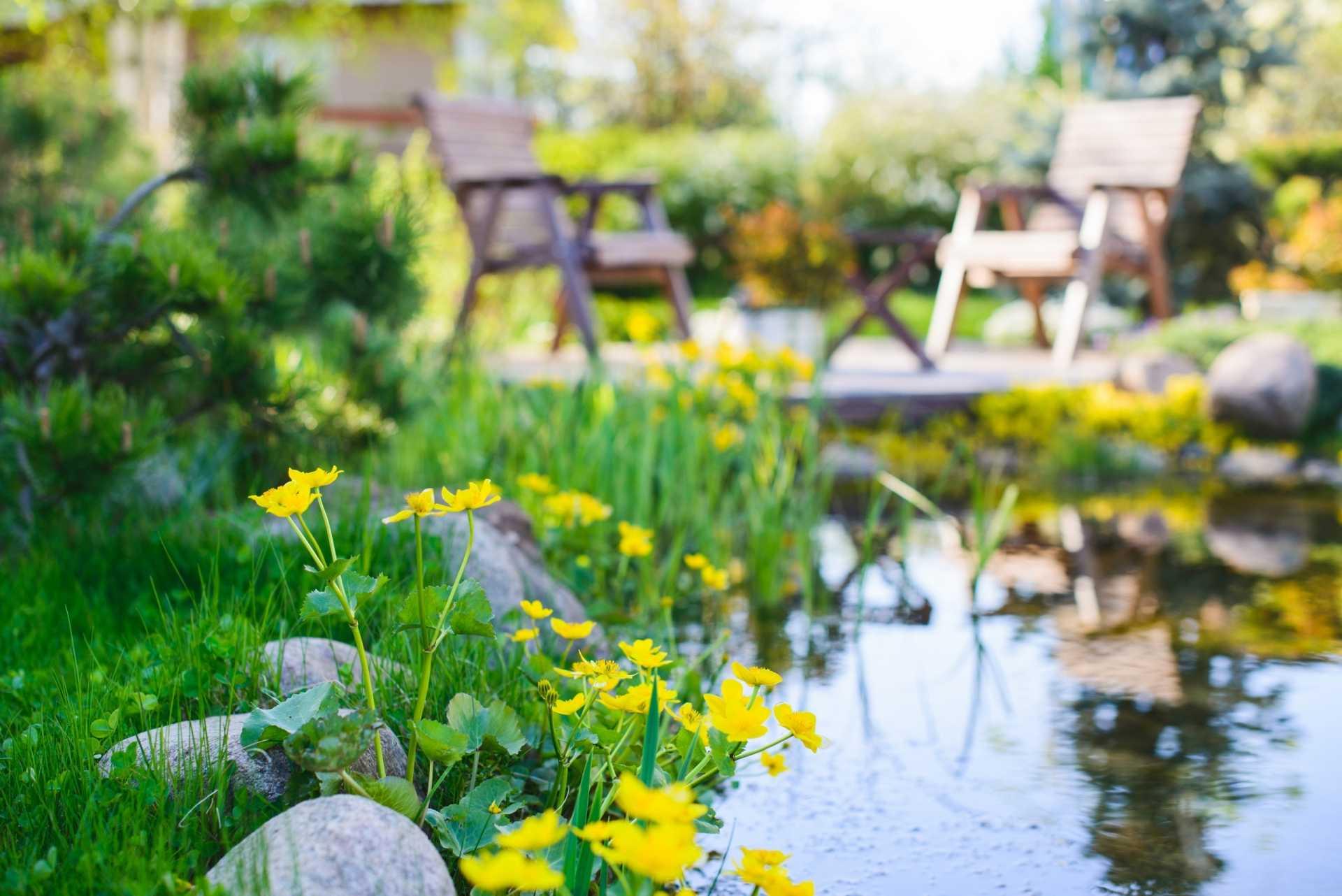 16 Wasserpflanzen für den Teich im eigenen Außenbereich