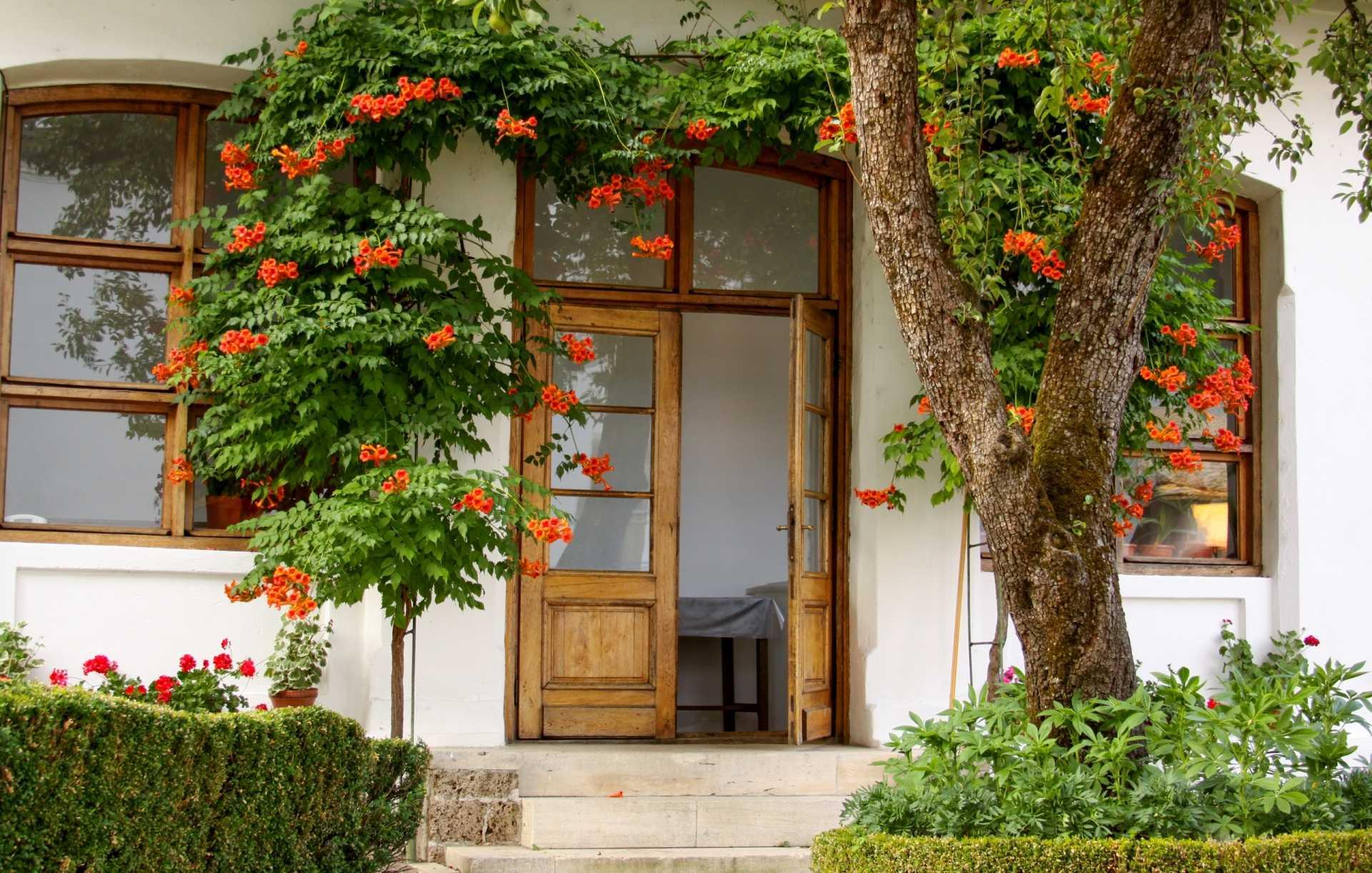 17 Immergrüne Hängepflanzen als dekorative Elemente im Außenbereich