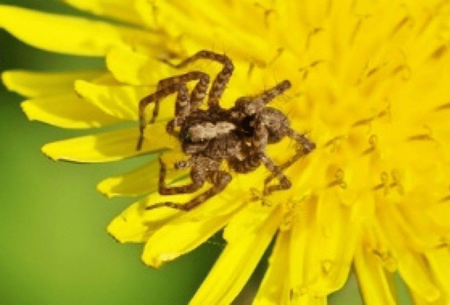 Insektenschwund kann durch Terra Preta verhindert werden