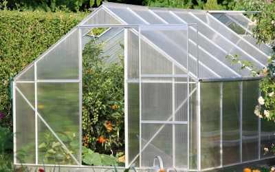 Tomaten im Gewächshaus anbauen – Schritt für Schritt erklärt