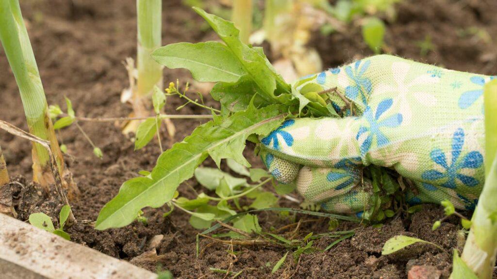Mit den richtigen Maßnahmen vermeiden Sie Unkraut in Gartenbeeten
