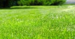 Unkrautvernichter - So werden Sie Unkraut im Rasen wieder los!