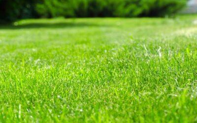 Unkrautvernichter – Wissenswertes zu Hausmitteln, organischen Mitteln und Chemie