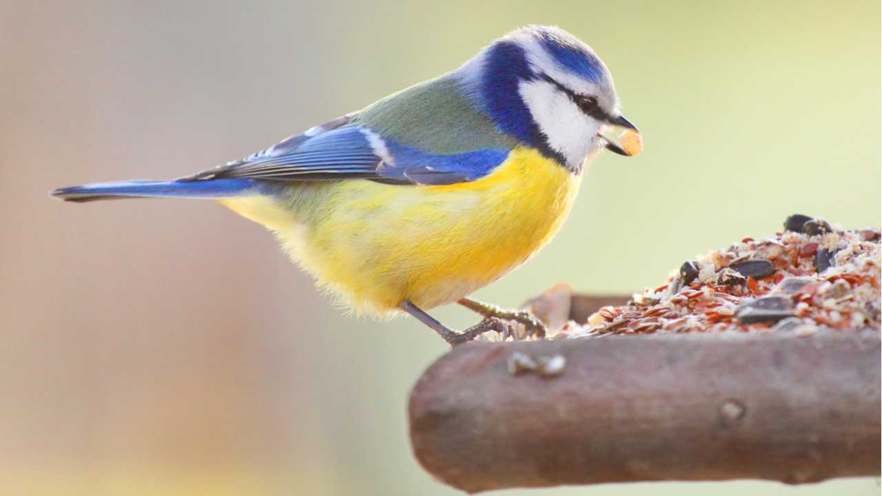 Vogelfutter selber machen – Piepshow garantiert