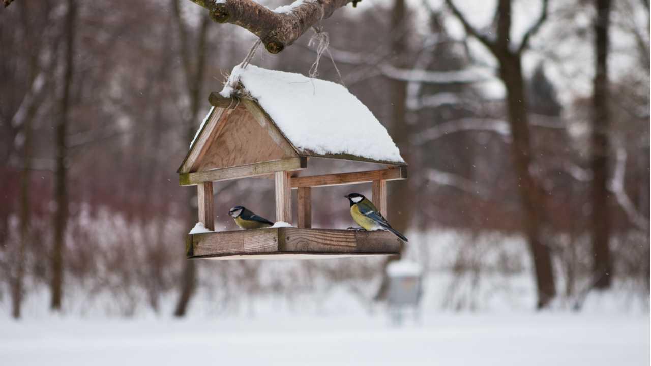 Vogelhaus bauen – Eine Anleitung