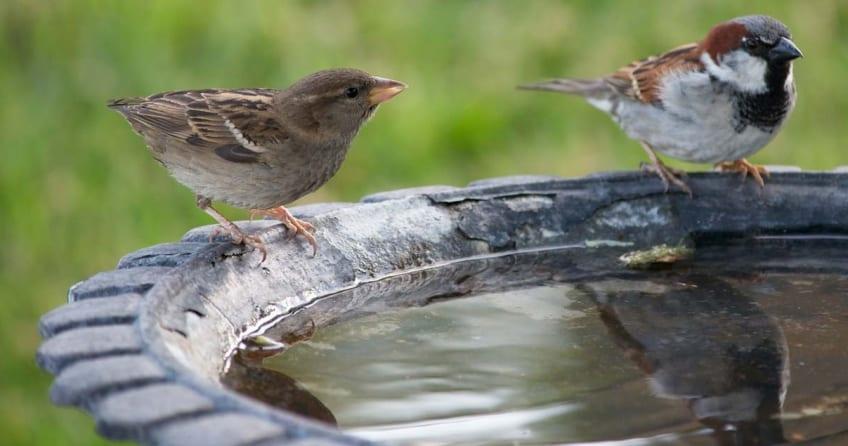 Eine Vogeltränke mit zwei Vögeln
