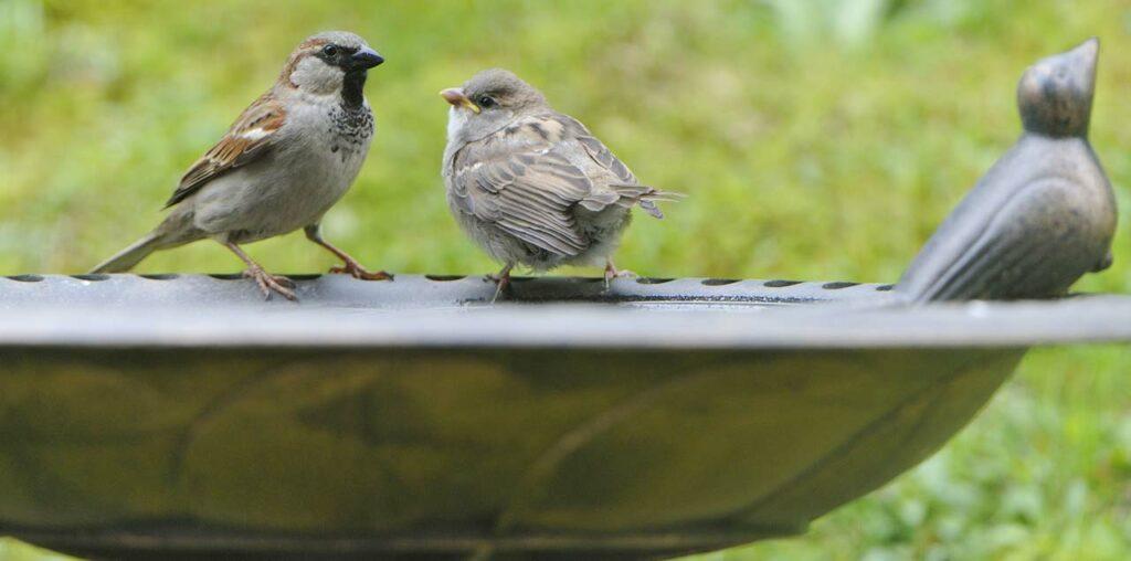 Vogeltränke aus Edelstahl