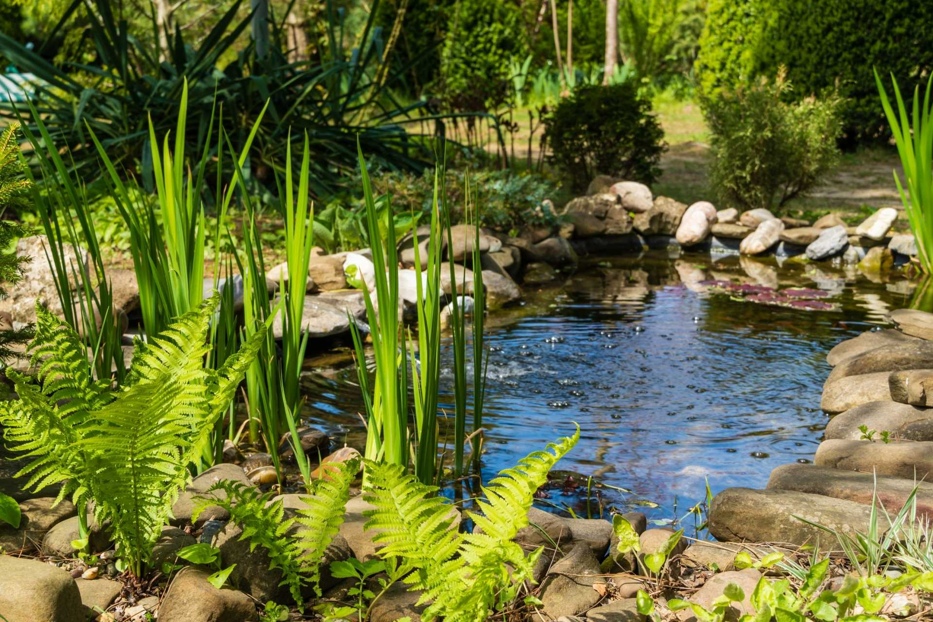 3 Wasserbecken Garten-Modelle für ein perfektes Teichbecken