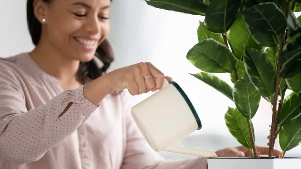 Das Gießen einer Pflanze ist essenziell für deren Überleben und deren Gesundheit.