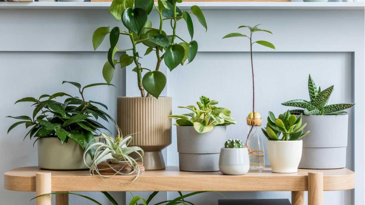 Zimmerpflanzen – 15 schnellwachsende Arten