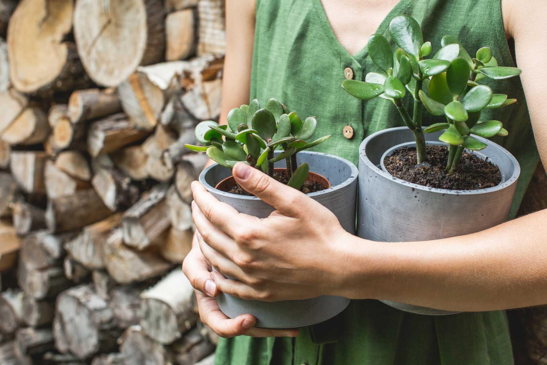Zimmerpflanzen düngen: Das richtige Nährstoffangebot schaffen