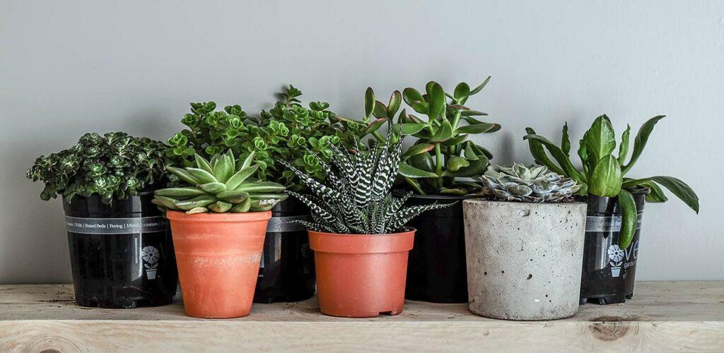Zimmerpflanzen können auch bei wenig Licht sehr gut aussehen