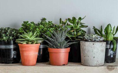 17 Zimmerpflanzen für wenig Licht – super pflegeleicht