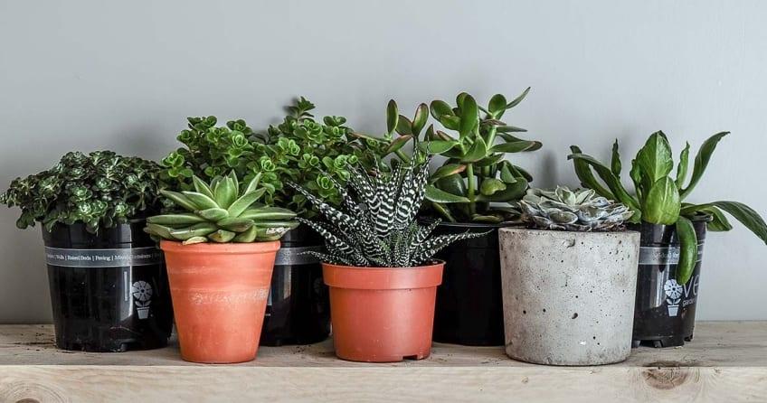 Zimmerpflanzen fuer wenig Licht - 17 perfekte Ideen