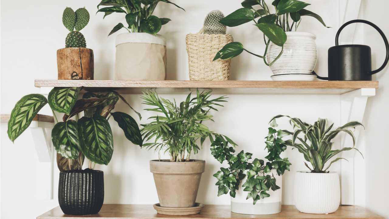 Zimmerpflanzen – Top 15 Fragen beantwortet