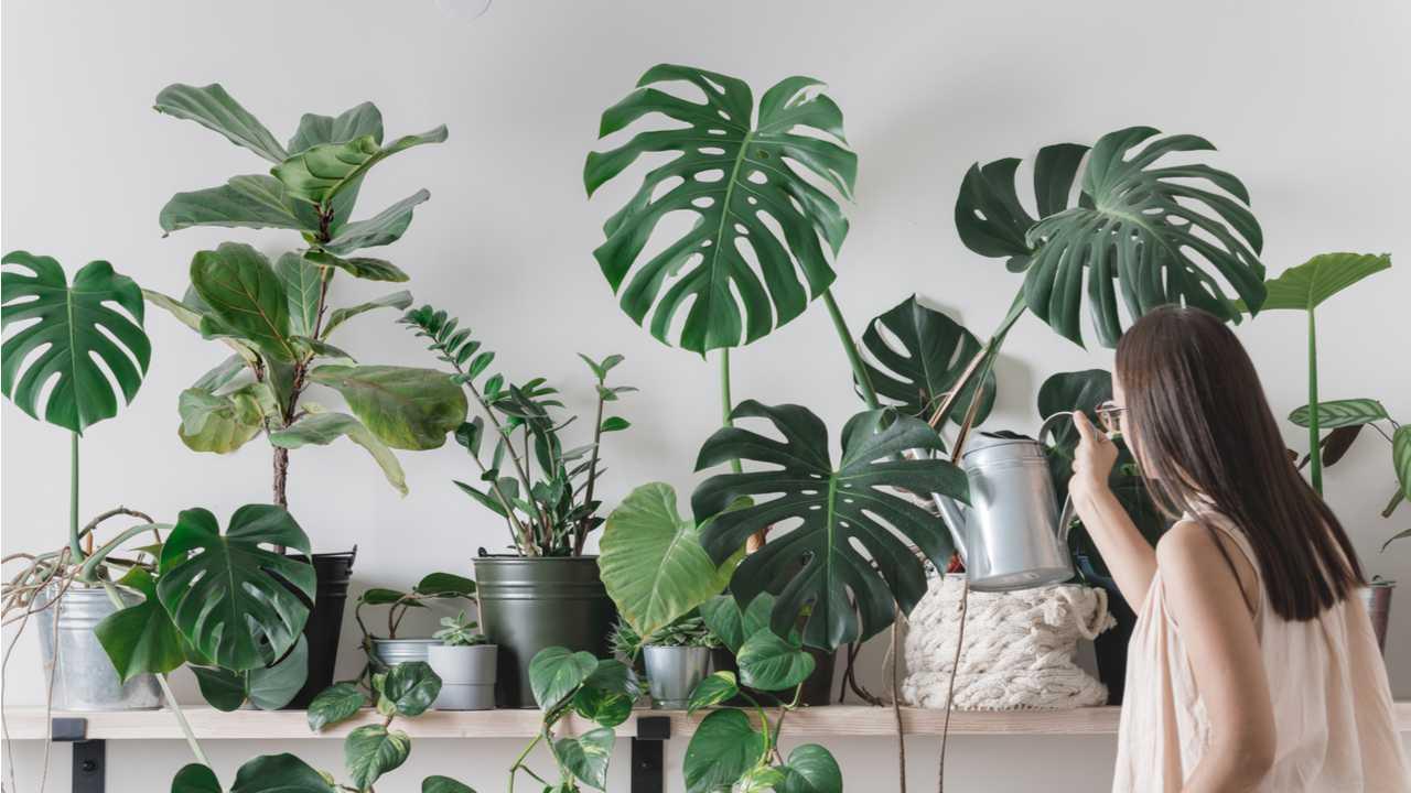Zimmerpflanzen Pflege für Einsteiger