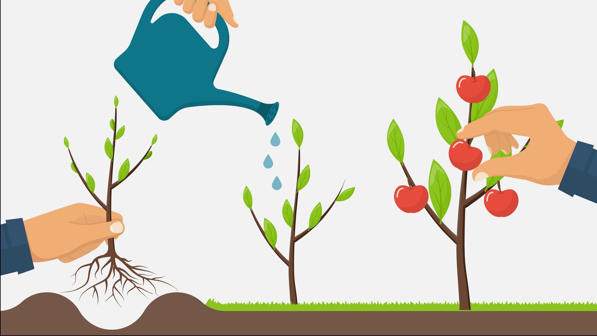So pflanzen Sie einen Baum in vier Schritten