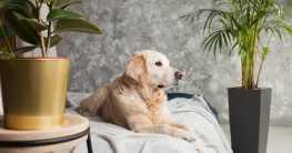 In diesem Beitrag gehts um 26 Pflanzen, die giftig für den Hund sind.