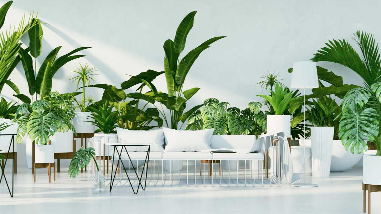 8 große und pflegeleichte Zimmerpflanzen