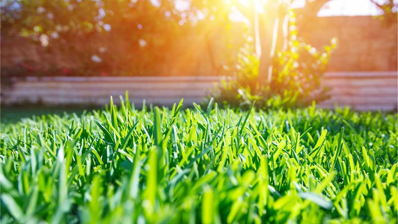 Rasen kalken und düngen: Das müssen Sie beachten