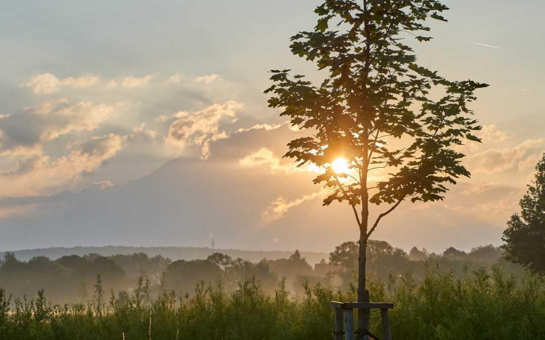 15 schnell wachsende Bäume, denen Sie beim Wachsen zusehen können