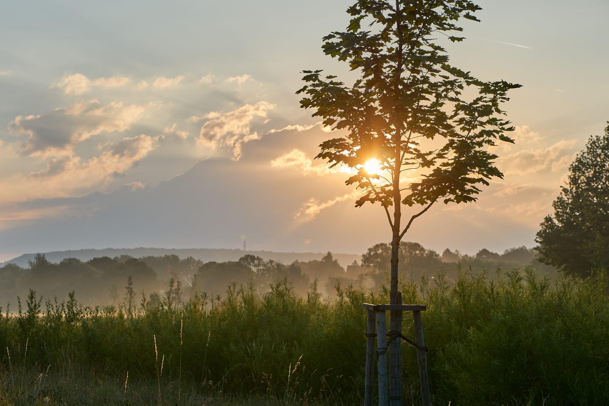 Drei Pfähle verhelfen einem jungen Baum zu mehr Stabilität