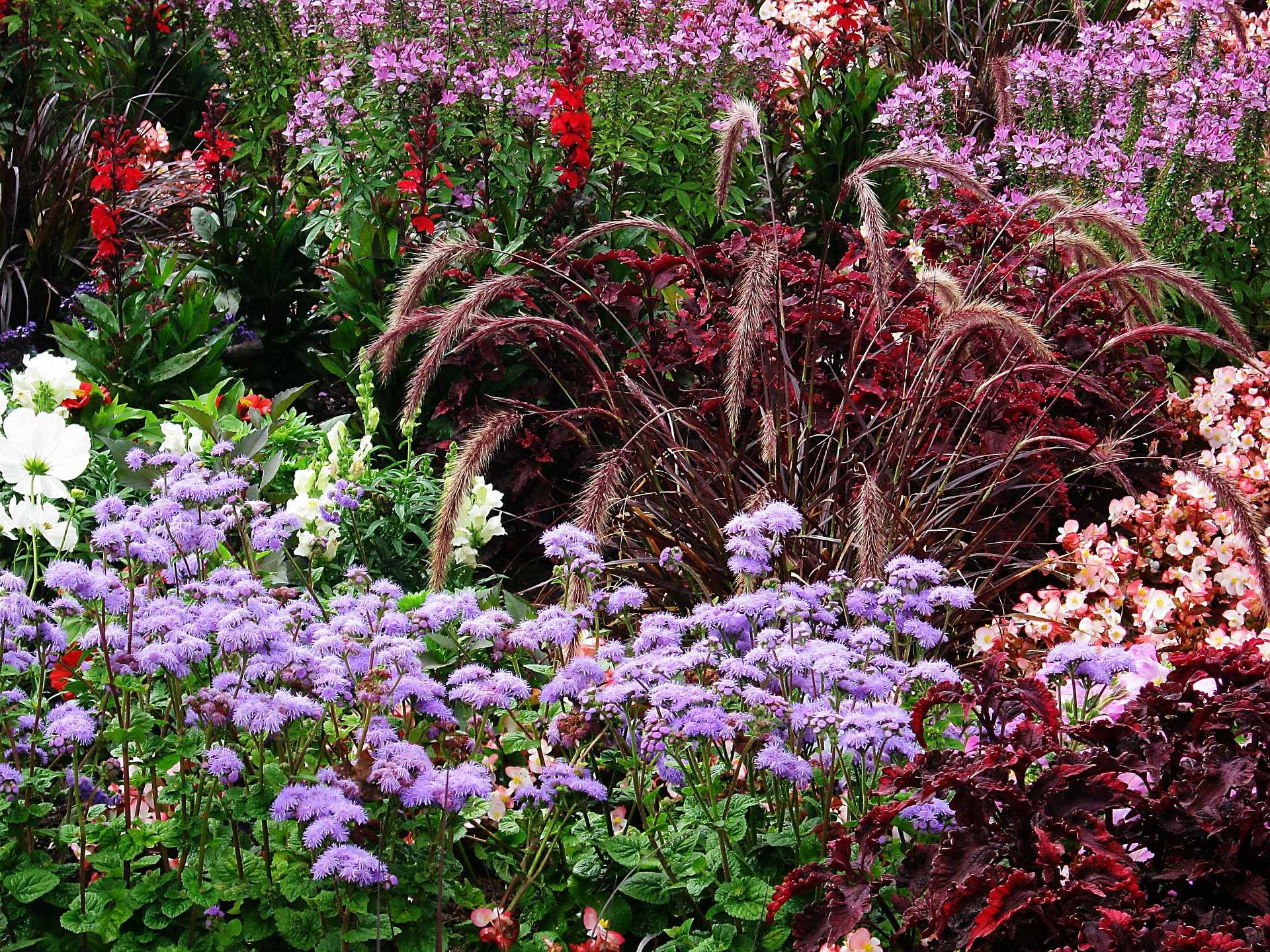 15 beliebte & blühende Schattenpflanzen