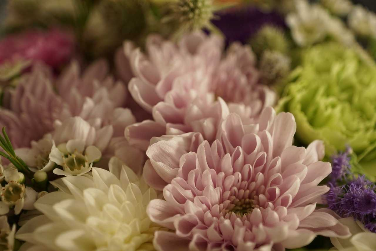 11 Schnittblumen im Winter & wie diese länger halten