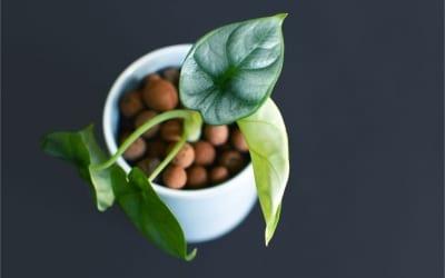 Zimmerpflanzen in Hydrokultur pflanzen – so funktioniert es!