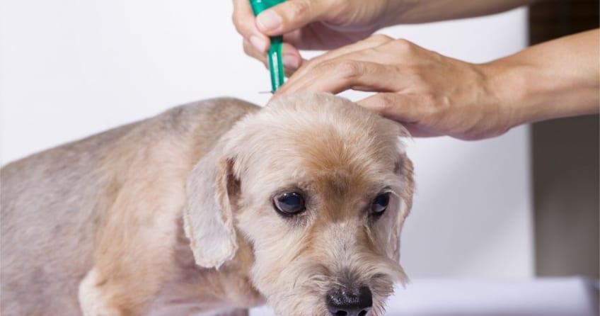 Anwendung der Spot-ons bei Hunden