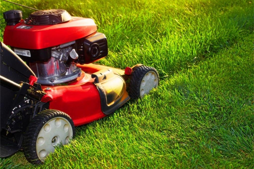 Regelmäßiges Rasen mähen beugt Klee im Rasen vor.