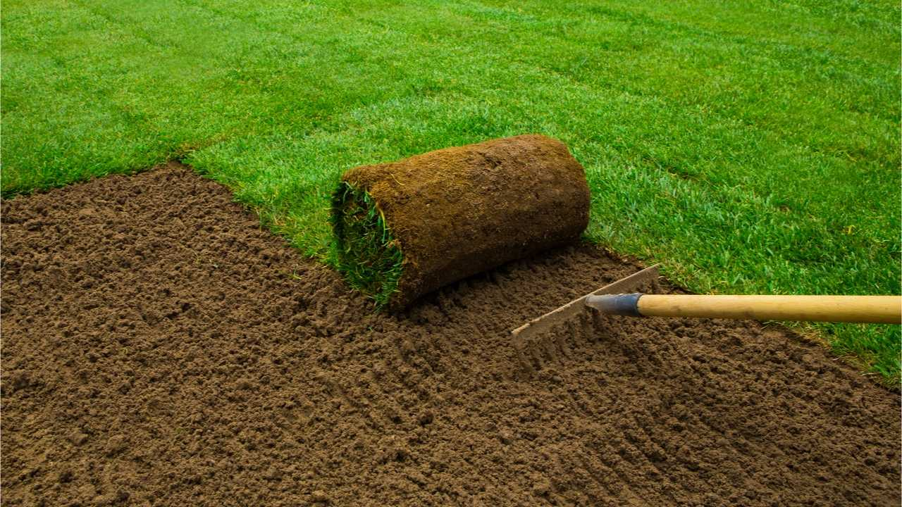 Rasen neu verlegen – So schnell und einfach geht's