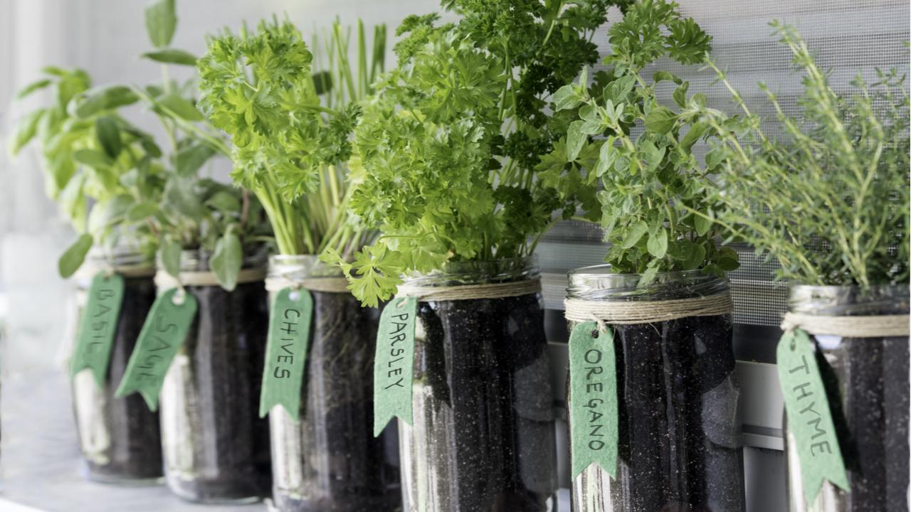 Kräuter selbst anbauen – Nie wieder Gartenkräuter kaufen
